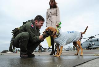 An aviator greets his dog after returning home. by Flickr user Official U.S. Navy Imagery
